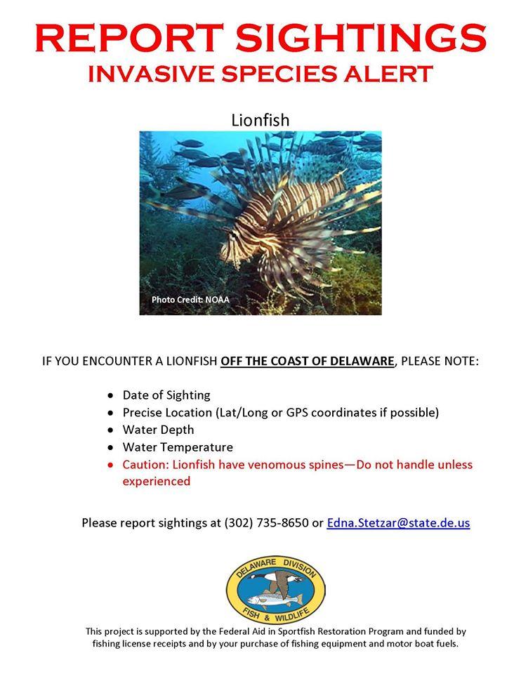 Red Lionfish Alert